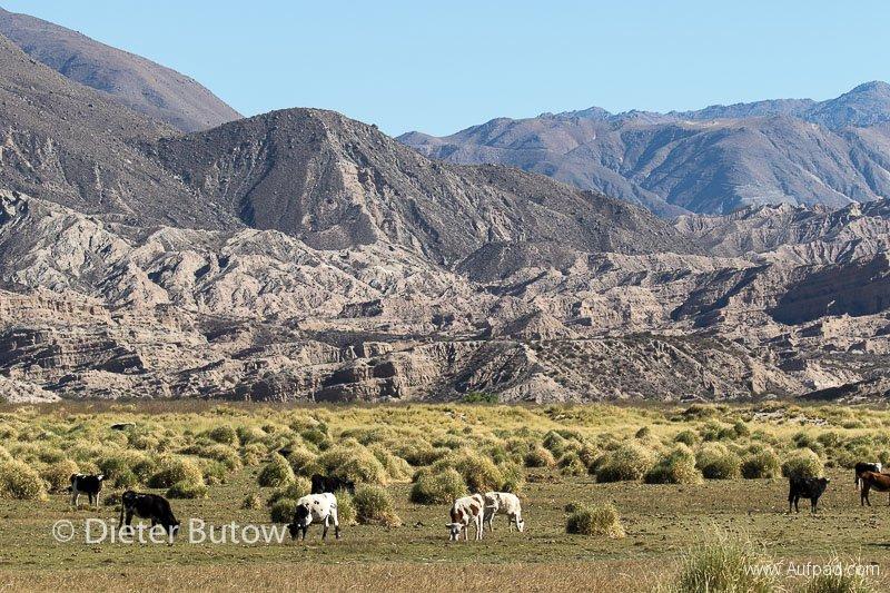 Argentina Quebradas_Coloured Mountains_Pumice Forms-56