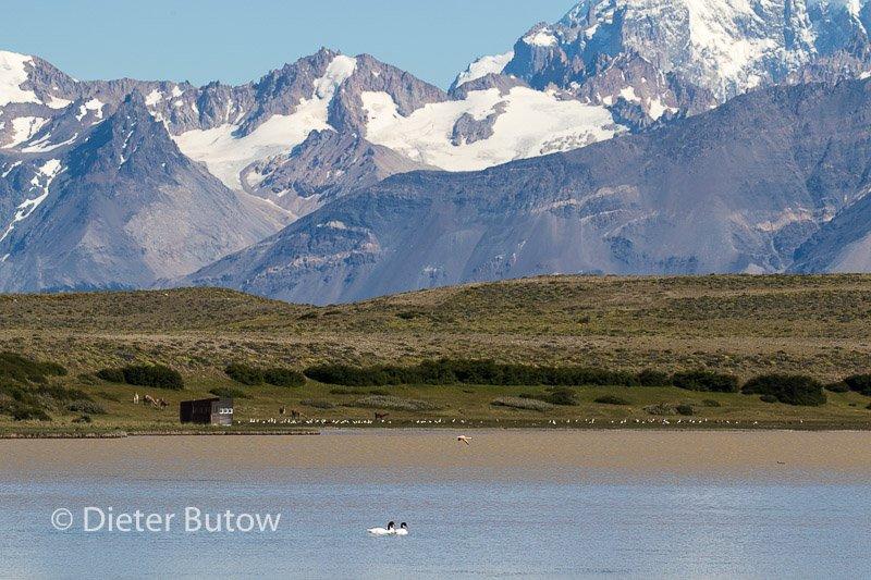 Argentina 12 PN Moreno to Cueva de Manos-23