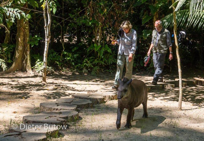 Bolivia Madidi Jungle Tour-10