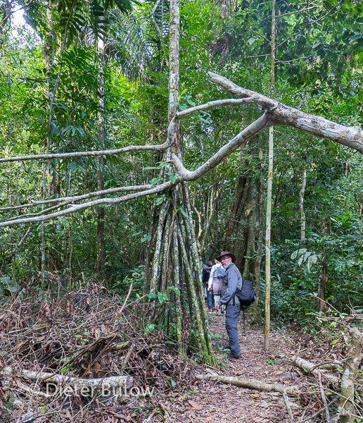Bolivia Madidi Jungle Tour-15