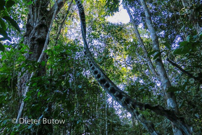 Bolivia Madidi Jungle Tour-17