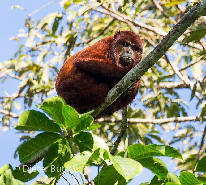 Bolivia Madidi Jungle Tour-19