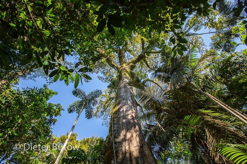 Bolivia Madidi Jungle Tour-43