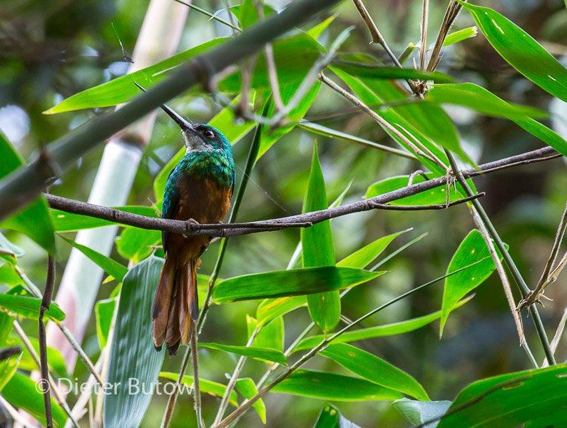 Bolivia Madidi Jungle Tour-59