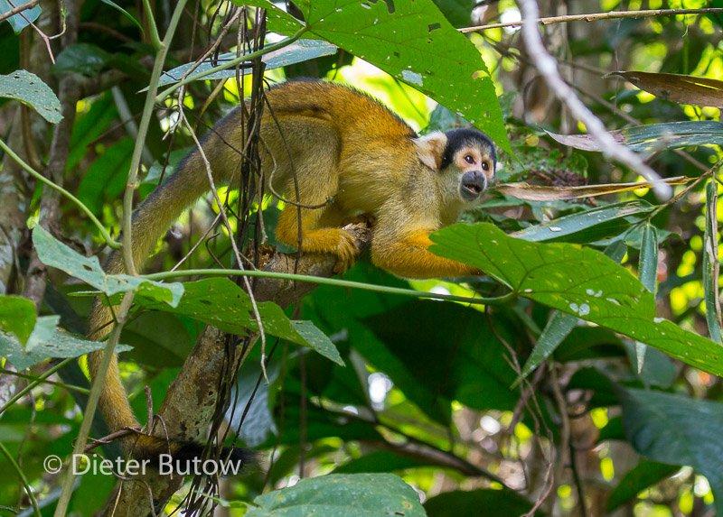 Bolivia Madidi Jungle Tour-61