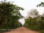 Brasil North Pantanal