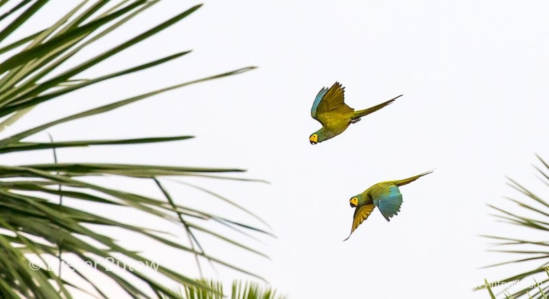 Brasil North Panatanal & Porto Jofre-82
