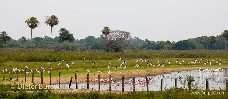 Brasil Rio Miranda to Corumba-55
