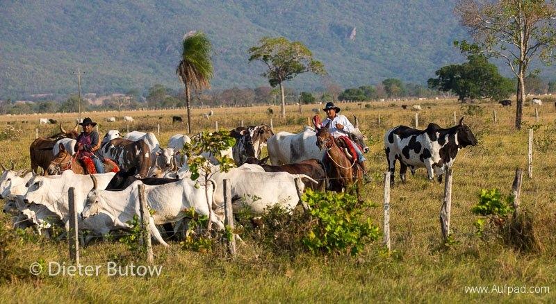 Brasil Rio Miranda to Corumba-70
