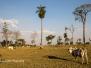 Brasil South Panatanal_Bonito