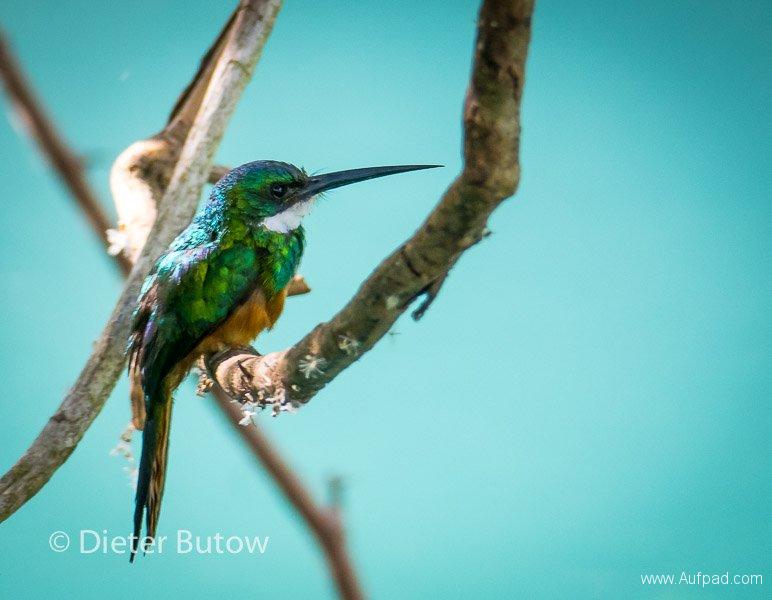 Brasil South Panatanal_Bonito-4