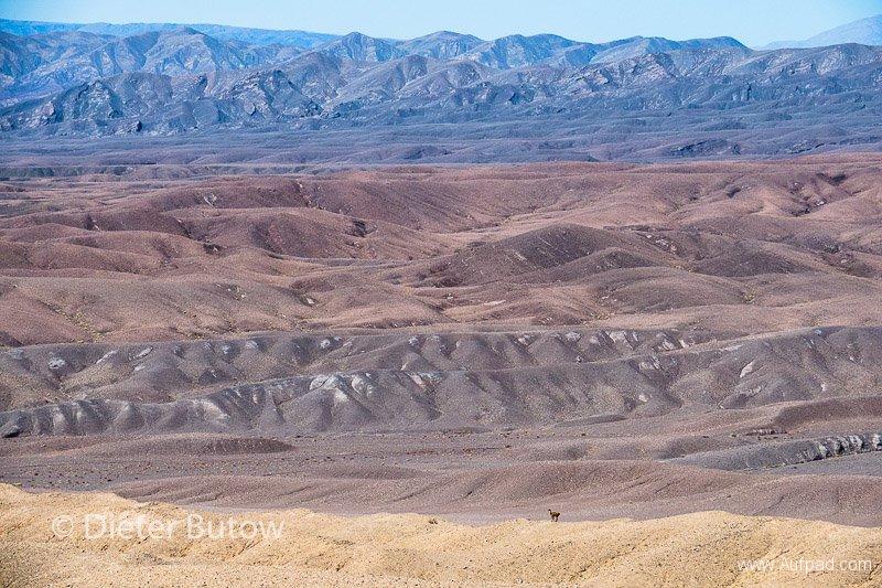 Chile Arica to San Pedro de Atacama-24