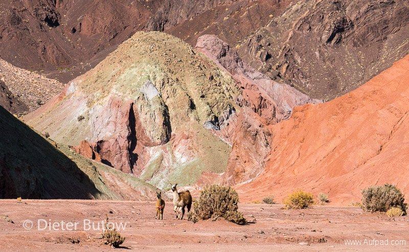 Chile Arica to San Pedro de Atacama-21