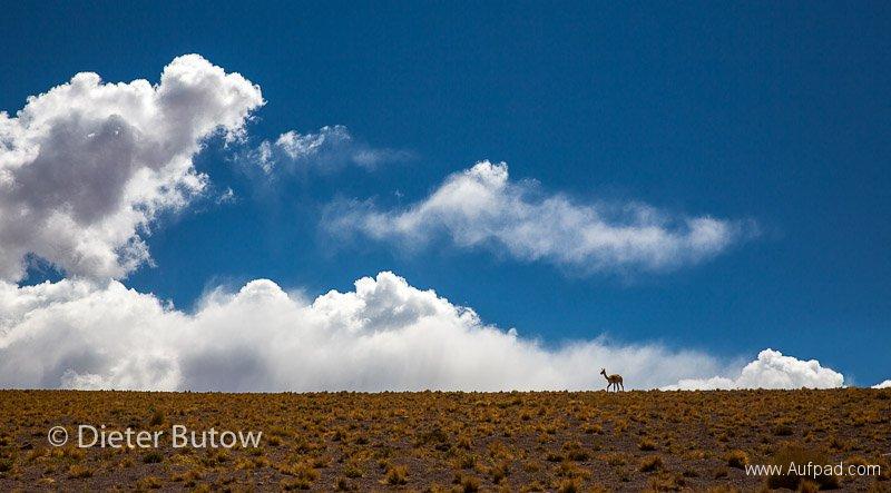 Chile El Tatio to PN Llanos Challe-19