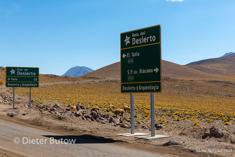 Chile El Tatio to PN Llanos Challe-9