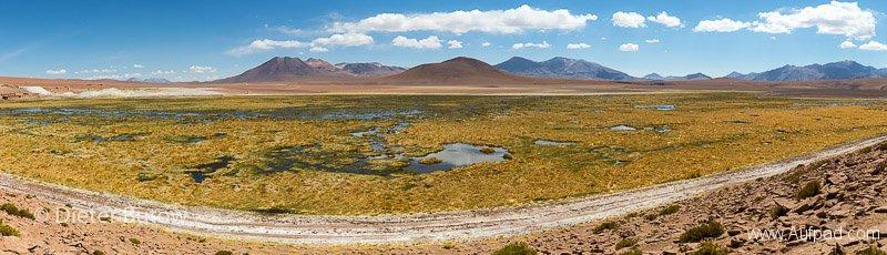 Chile El Tatio to PN Llanos Challe-12