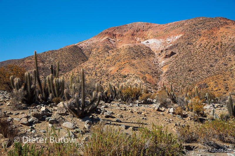 Chile PN Las Chinchillas and Coast-10