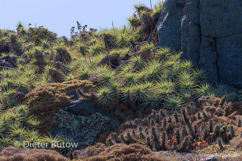 Chile PN Las Chinchillas and Coast-25