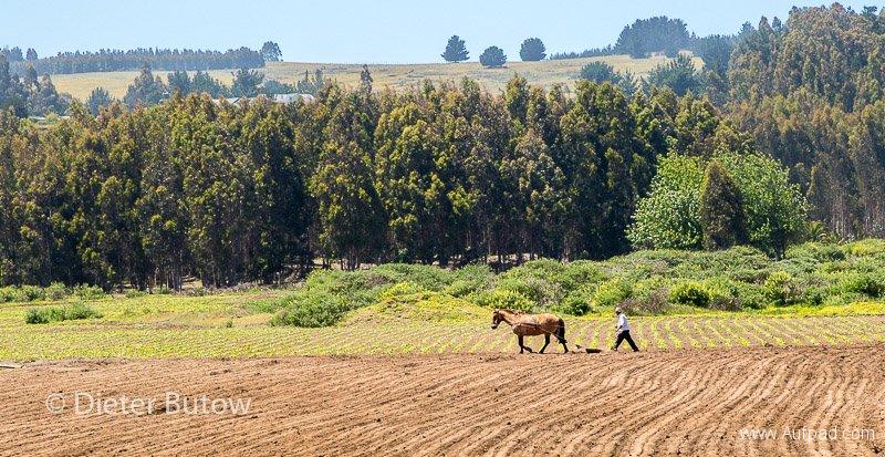 Chile Santiago to Pucón-15