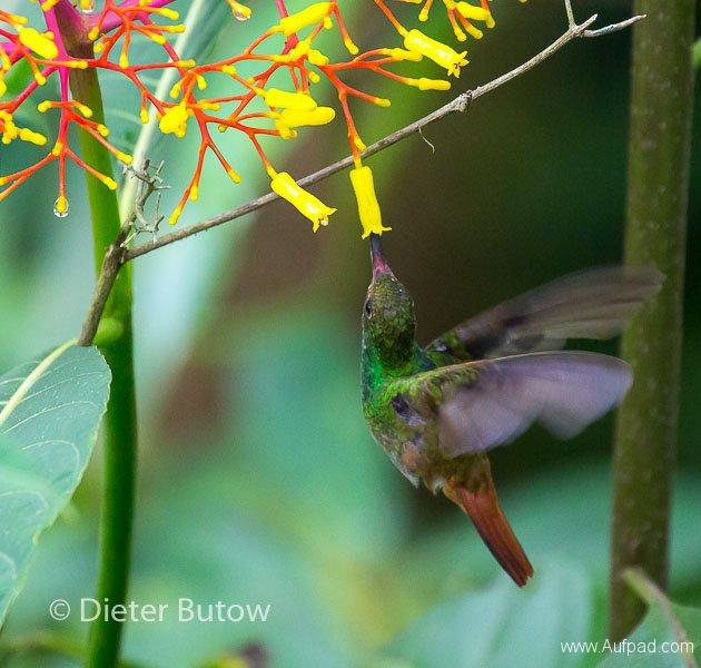 Birds of Mindo-34