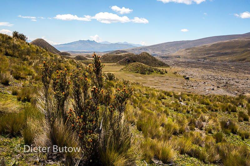 Ecuador 1b Cotopaxi & Quito -116