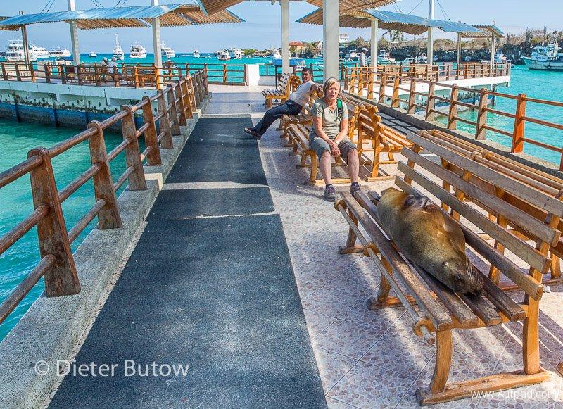 Gal A4 Puerto Ayora -Darwin Stn-15