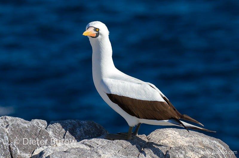 Gal A5 Española -Punta Suarez & Playa Gardner-15