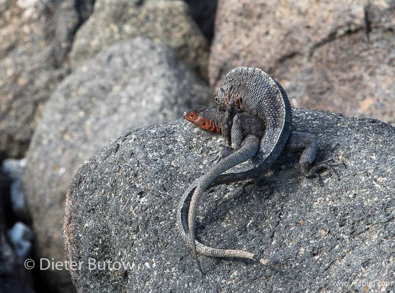 Gal B2 Mosquera-Cerro Dragon-5