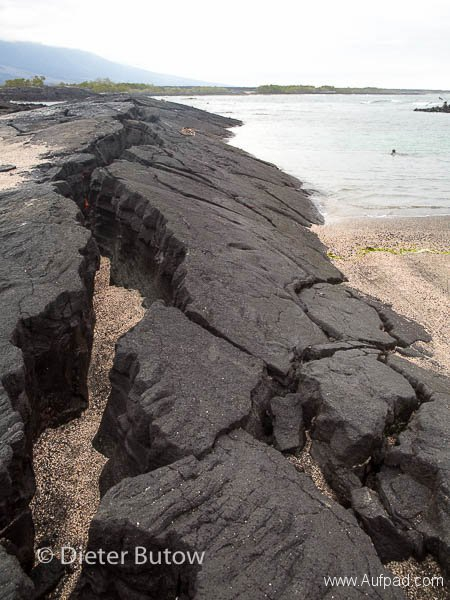 Gal B3 Tagus Cove-Punta Espinosa-28