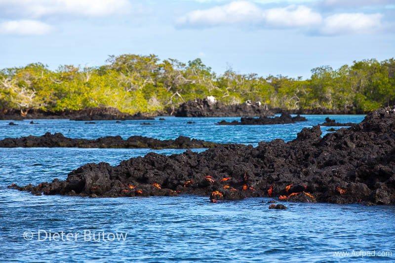 Gal B4 Urbina Bay-Bahia Elizabeth-19
