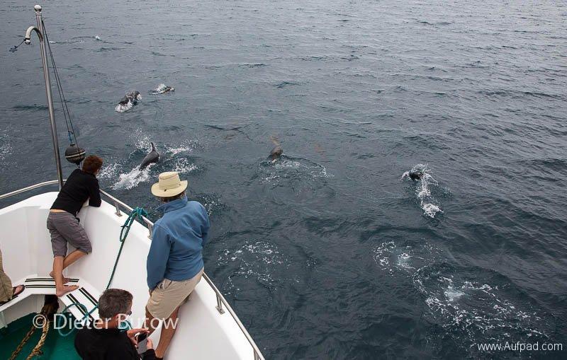 Gal B4 Urbina Bay-Bahia Elizabeth-9