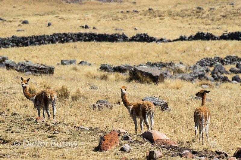 Peru Cusco to Cordilliera Blanca-110