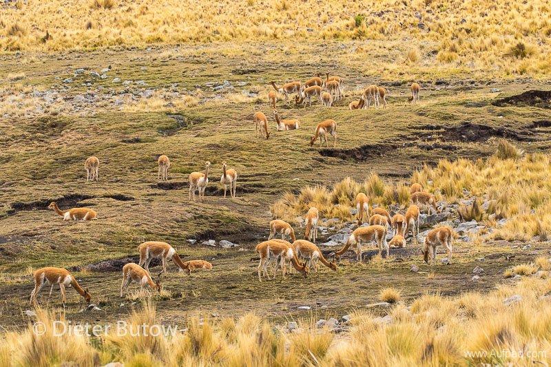 Peru Cañon de Cotahuasi-3