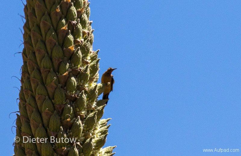 Parque Huascaran A-143