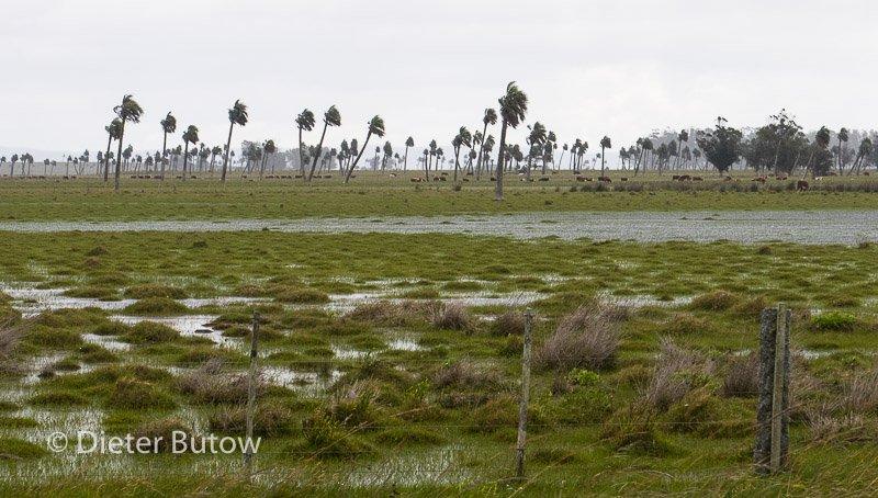 Along the coast of Uruguay-119