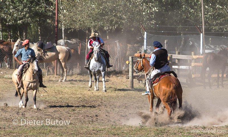 Argentina - Gauchos and Parque Lanin-1