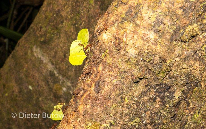 Bolivia Madidi Jungle Tour-21