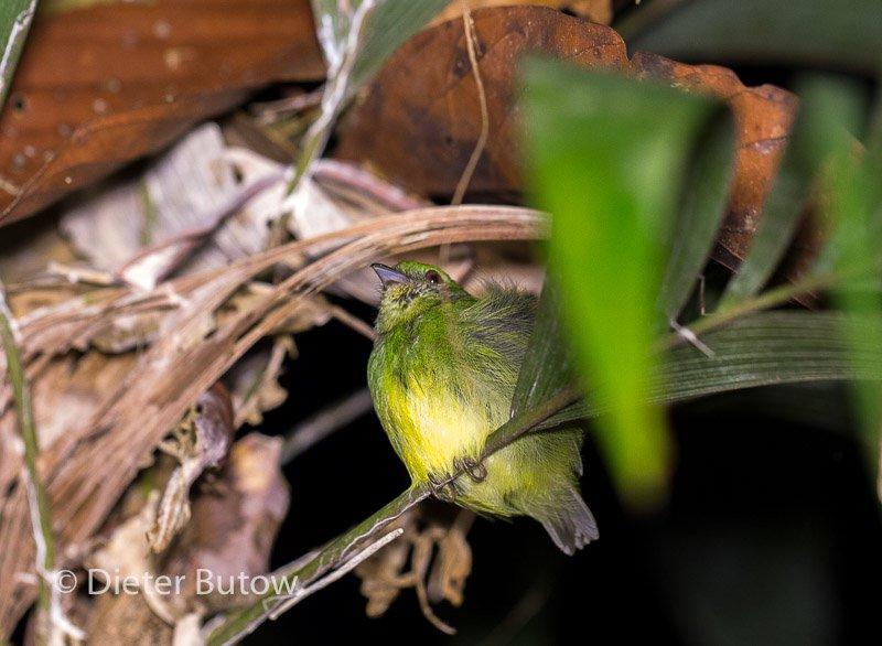 Bolivia Madidi Jungle Tour-26