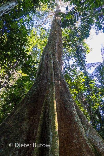 Bolivia Madidi Jungle Tour-36