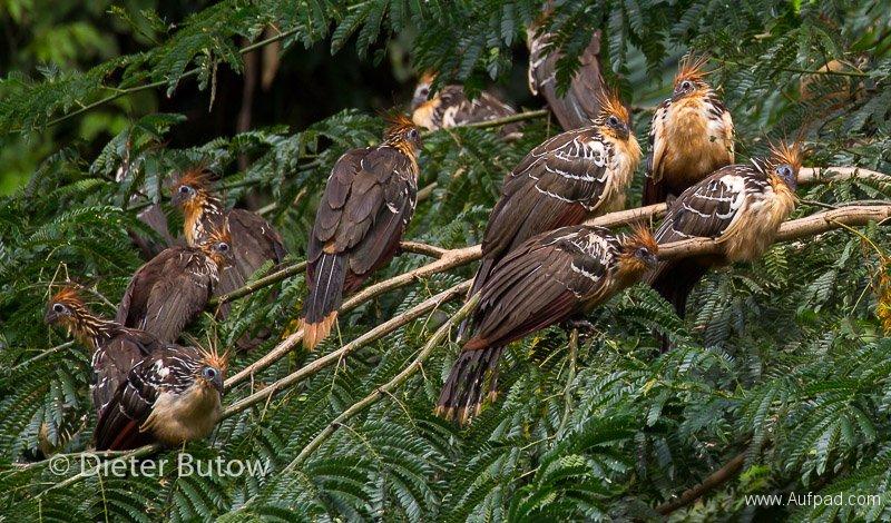 Bolivia Madidi Jungle Tour-60