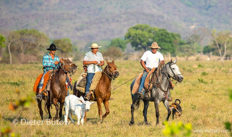 Brasil Rio Miranda to Corumba-71