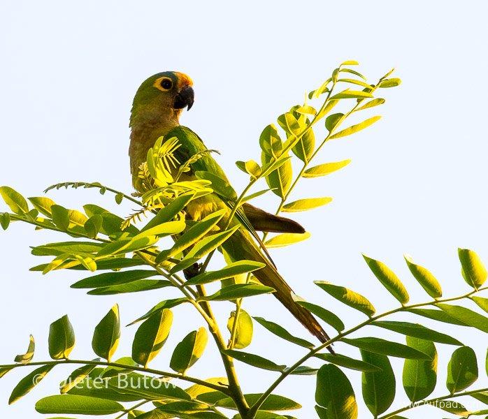 Brasil South Panatanal_Bonito-23