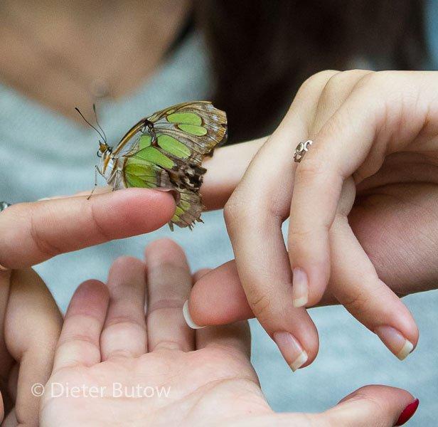 Butterflies around Foz de Iguaçu-11