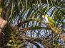 Butterflies & Birds near Iguaçu