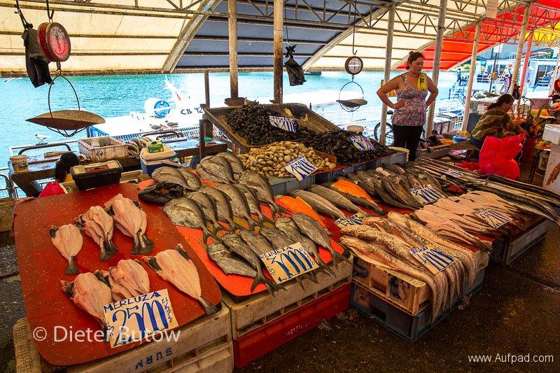 Chile Araucarias Valdivia Puerto Varas-17