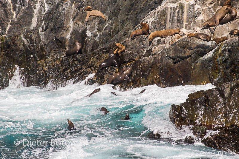 Chile PN Las Chinchillas and Coast-24