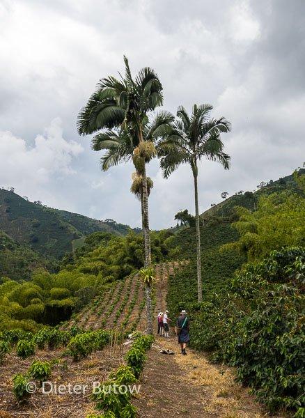 Col 5 Filandia,Marsella and Hacienda Guayabal-163