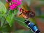 Ecuador: Butterflies of Mindo