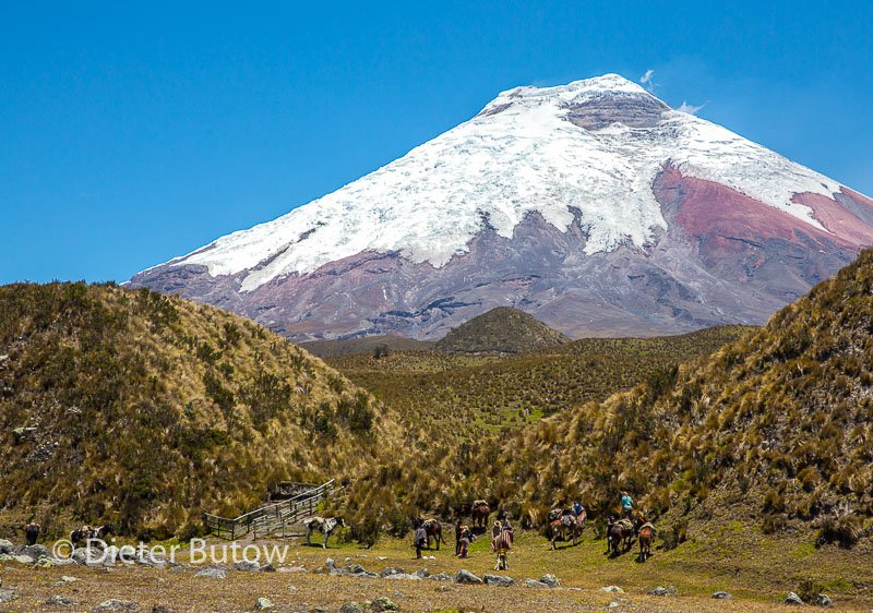 Ecuador 1b Cotopaxi & Quito -113