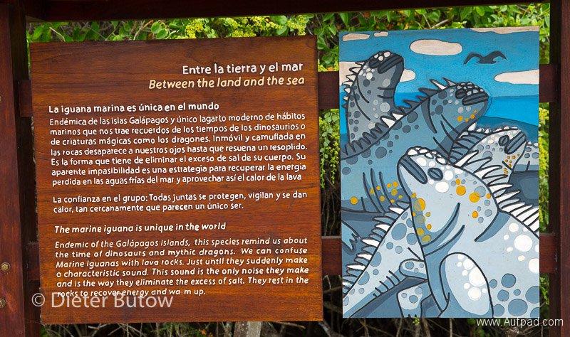 Gal A4 Puerto Ayora -Darwin Stn-3